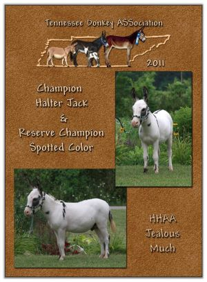2011 Tennessee Donkey ASSociation High Point Halter Jack (Tie)
