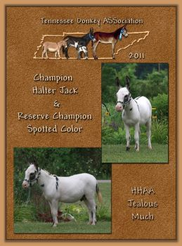 2011 Tennessee Donkey ASSociation High Point Halter Jack