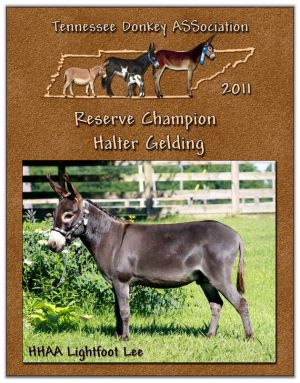 2011 Tennessee Donkey ASSociation Reserve High Point Halter Gelding