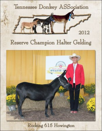 Reserve High Point Halter Gelding