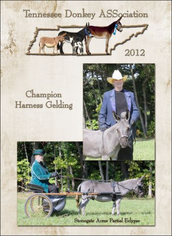 High Point Champion Harness Gelding