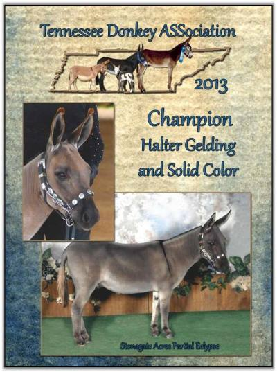 Mookie, 2013 Tennessee High Point Champion Halter Gelding