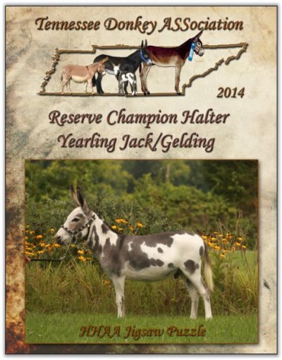 HHAA Jigsaw Puzzle, Reserve Champion Yearling Jack/Gelding at Halter