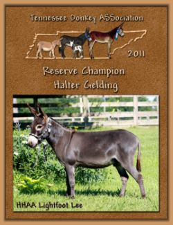 2011 Tennessee Donkey ASSociation's Reserve High Point Halter Gelding!