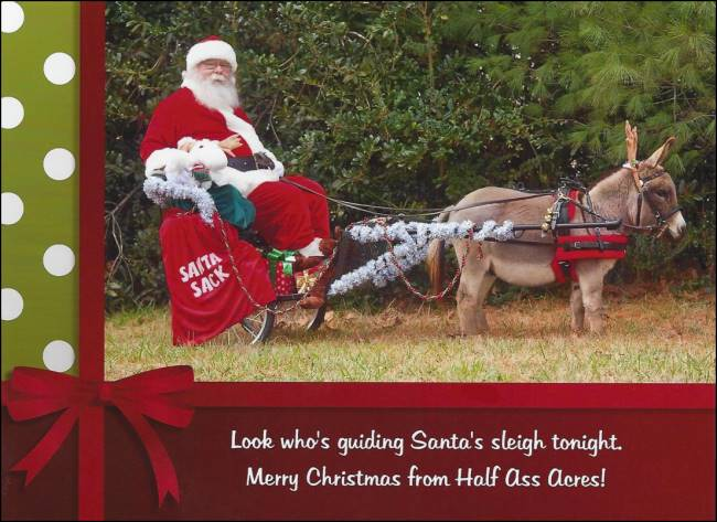 Merry Christmas from Half Ass Acres Miniature Donkeys!