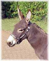 Miniature Donkey My World Diablo (6017  bytes)