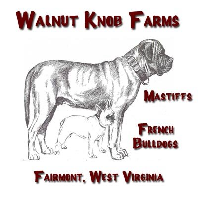 Walnut Knob Farms in Fairmont, West Virginia ~ raising Mastiffs and French Bulldogs
