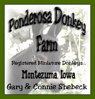 Ponderosa  Donkey Farm in Montezuma, Iowa
